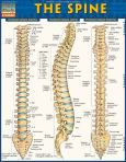 Bc The Spine